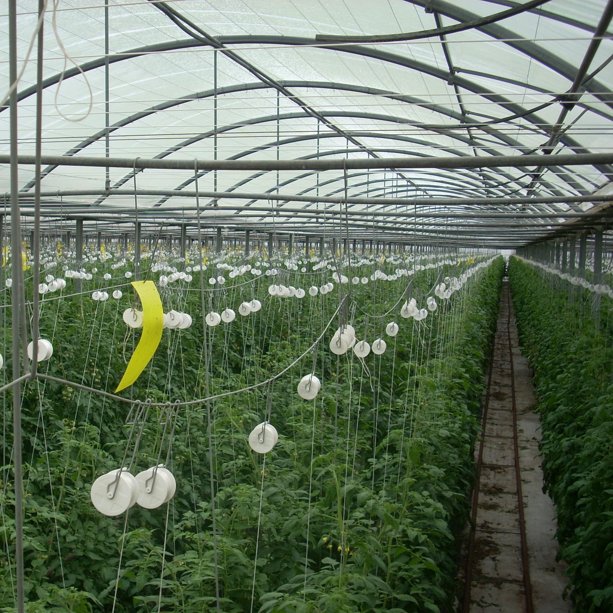 Plantation courge ou en plein air au sens large les for Portent ses fruits