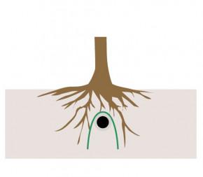 Anti Racines / Rhizomes / Bambou