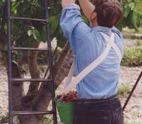 Harnais pour panier de récolte Kangourou