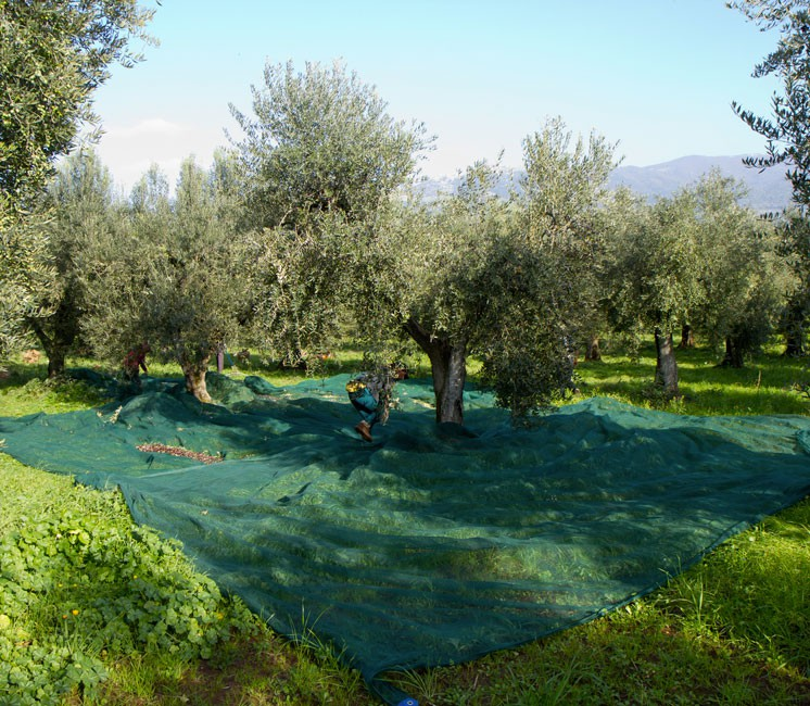 filet olive noix ch taigne r colte fendu 50g 8x8 m. Black Bedroom Furniture Sets. Home Design Ideas