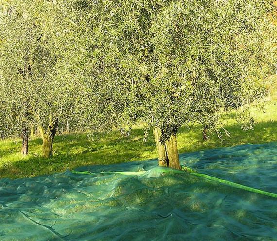 Filet de Récolte 65g Fendue avec Oeillets