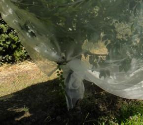 Alt'Droso (Filet Anti-Insecte)