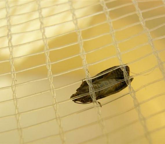 Alt'Carpo (Filet Anti-Insecte)