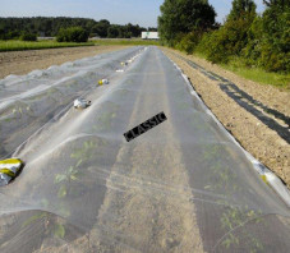 Filet de Anti-Insecte Bioclimat Grande Taille