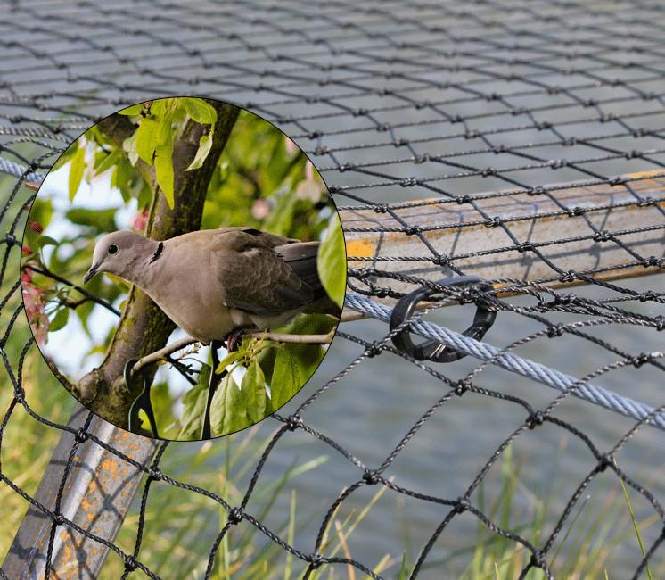 filet anti oiseaux anti pigeons maille 50mm. Black Bedroom Furniture Sets. Home Design Ideas