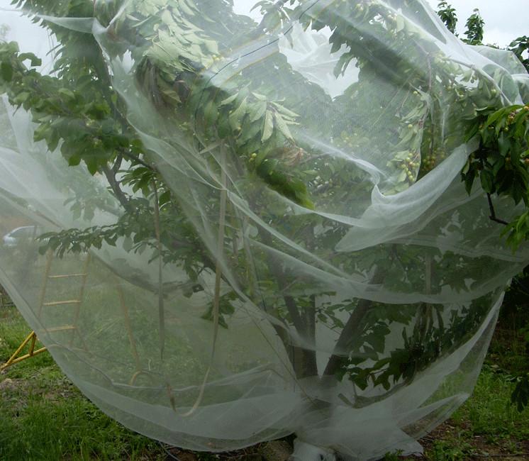 Filet Anti Insecte Alt'Droso 4x30m