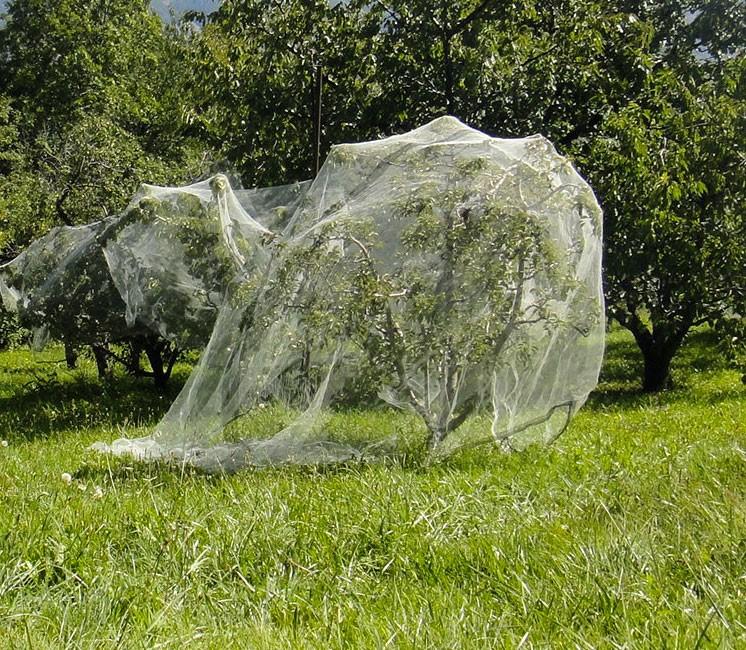 Filet anti-insecte Alt'Carpo 3.75x80m