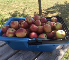 Panier de récolte pour fruits et légumes